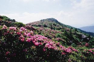 Springtime on Roan