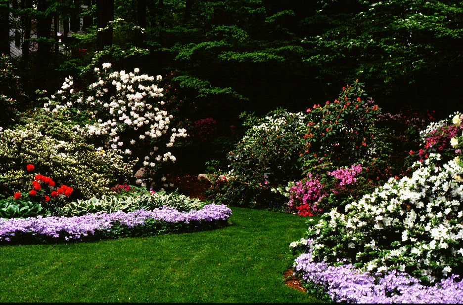 Landscaping With Rhododendrons And Azaleas