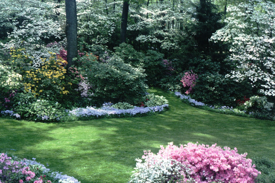 Landscaping with rhododendrons and azaleas for Landscape design for privacy
