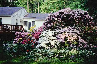 The Rhododendron Legacy Of Joe Gable